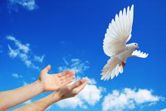 hands released into the sky to the white dove - stock photo