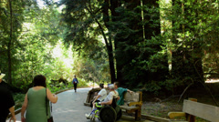 Muir Woods California CA above San Francisco young family walking with wonderful Stock Footage