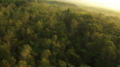 Aerial View: Flying birds. Mangrove forest in Krabi province, Thailand. - stock footage