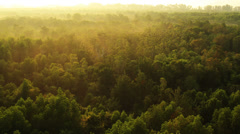 Stock Video Footage of Aerial View: Mangrove forest in Krabi province, Thailand.