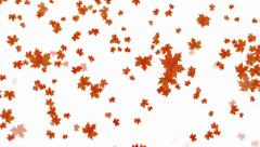 Maple fall background,autumn composition space. Stock Footage