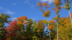 Smuggler's Notch Vermont Fall foliage colors in Northern New England with color Stock Footage