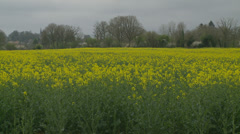 Car speeds by a rapeseed field Stock Footage