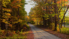 Bethel Maine trail woods fall colors path in Northern New England in leaf Stock Footage