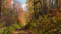 Bar Harbor Maine lonely path trail road with beautiful fall colors of red and Stock Footage