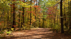 Rockland Maine fall foliage colors on trail in October leaves in leaf peeper Stock Footage