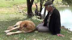 Shepherd with his sheepdog 5 Stock Footage