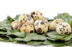 Nest of quail eggs and green leaves on a white background Stock Photos