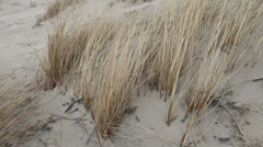 Dune grass waving in wind at seaside Stock Footage