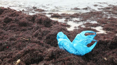 Seaweed covered sand beach and pollution with polyethylene bag - stock footage