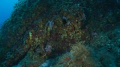 Underwater footage corraline coral corsica corse mediterranean Stock Footage