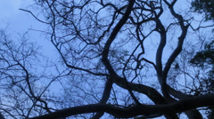 Ghost effect of tree Stock Footage