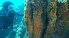 Underwater footage coral diver corsica corse mediterranean Stock Footage
