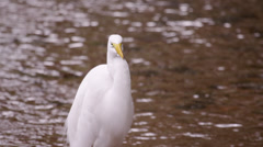 Static shot of white egret looking bird with rippling water in background. Stock Footage