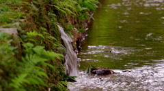 Shot of leafy covered rock and waterfall in botanical garden. Stock Footage
