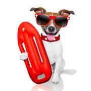 Stock Photo of lifeguard dog