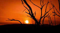 4K eerie sunset dead tree branches with red sky background Stock Footage