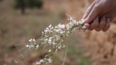 Flowers in hand Stock Footage