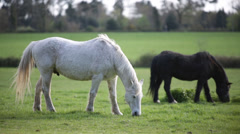 White and black horses Stock Footage