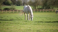 white horse - stock footage