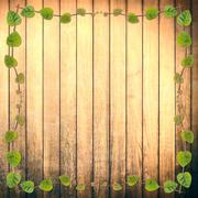 green creeper plant frame on rough wood plank - stock photo