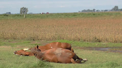 Two horses playing in the grass - stock footage