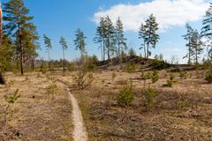 Footpath in forest Stock Photos