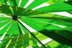 Water tube palm leaves Stock Photos