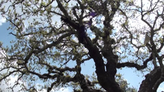Spring green limb of tree Stock Footage