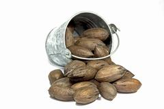 overturned bucket spilling newly harvested pecan nuts - stock photo
