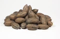 random pile of newly picked pecan nuts - stock photo