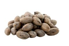 pile of newly picked pecan nuts on white - stock photo