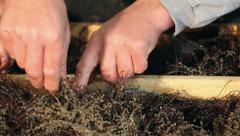 Pike-perch hatchery farm Stock Footage