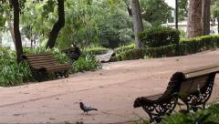 Estrela Park with Pigeons.mp4 Stock Footage