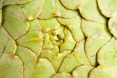 Fresh green organic artichoke Stock Photos