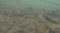 bottom of lake drag across - stock footage