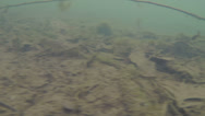 Stock Video Footage of bottom of lake drag across
