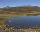 Stock Video Footage of RONDANE NORWAY: Lichen covered arctic landscape + pan small lake or kettle hole,