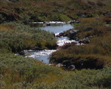 Stream in valley, tundra dwarf shrubs, sedges and grasses, mosses, and lichens Stock Footage