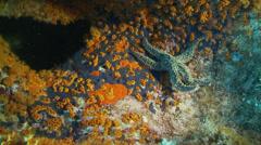 Underwater footage starfish corsica corse mediterranean Stock Footage