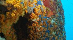 Underwater footage colored coral corsica corse mediterranean - stock footage