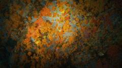 Underwater footage serran fish corsica corse mediterranean Stock Footage