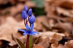 nice hyacinth flower - stock photo