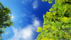 Green foliage against blue sunny sky Stock Footage