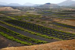 Cultivation home viticulture  spain lvine screwcrops  barrel Stock Photos