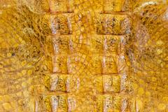 alligator skin - stock photo