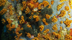 Underwater footage corsica corse mediterranean Stock Footage