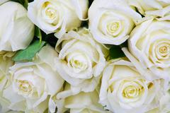 White roses in dew drops Stock Photos