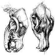 Dog Skull Stock Illustration