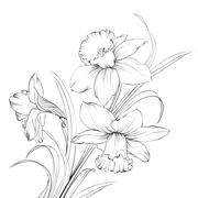 Daffodil flower or narcissus isolated on white. Stock Illustration